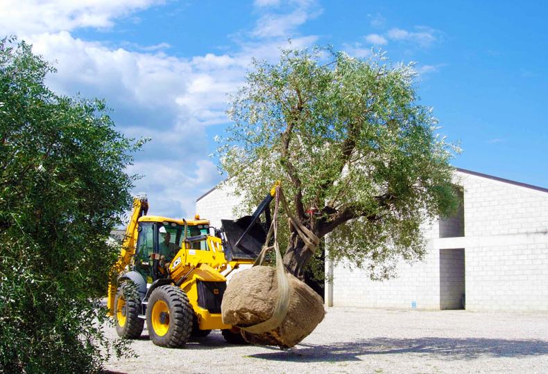 Progettazione realizzazione e manutenzione giardini aree for Vivai piante
