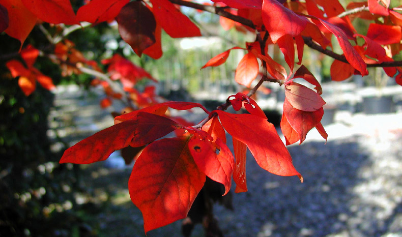 autunno.colori.vivai.de.zottis.livio.01