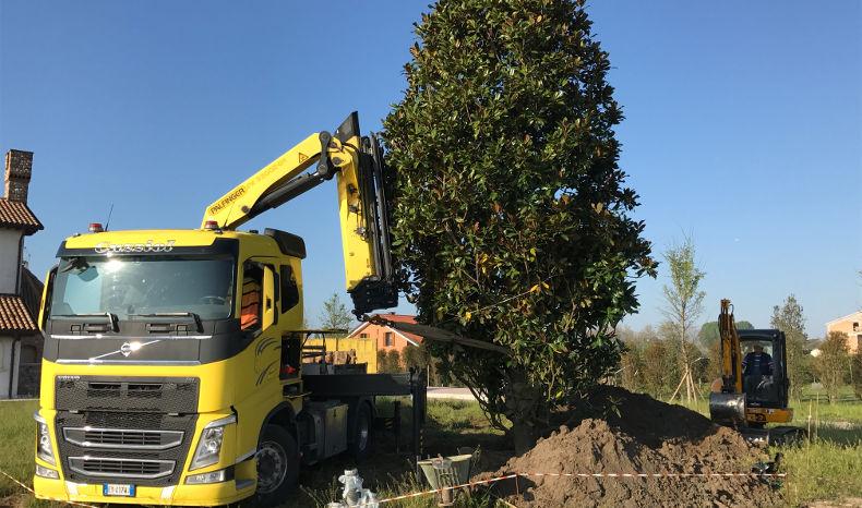 Trapianto Magnolia3